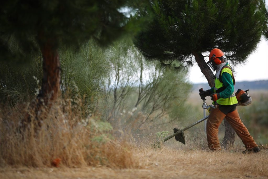 EL AYUNTAMIENTO DE LAS ROZAS COMIENZA LA OPERACIÓN DE DESBROCE PARA PREVENIR INCENDIOS
