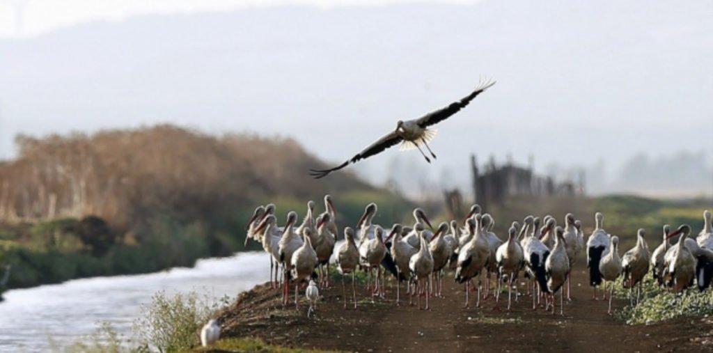 MÁS DE UNO SIERRA – Día de las Aves mañana en El Escorial con SEO Sierra de Guadarrama
