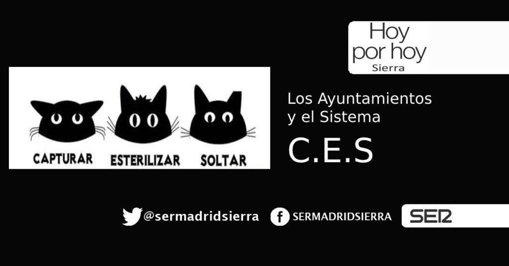 HOY POR HOY. Los Ayuntamientos, los gatos y el C.E.S