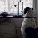 CADENA SER. HOY POR HOY SIERRA. Cuando nos separamos de nuestros perros…